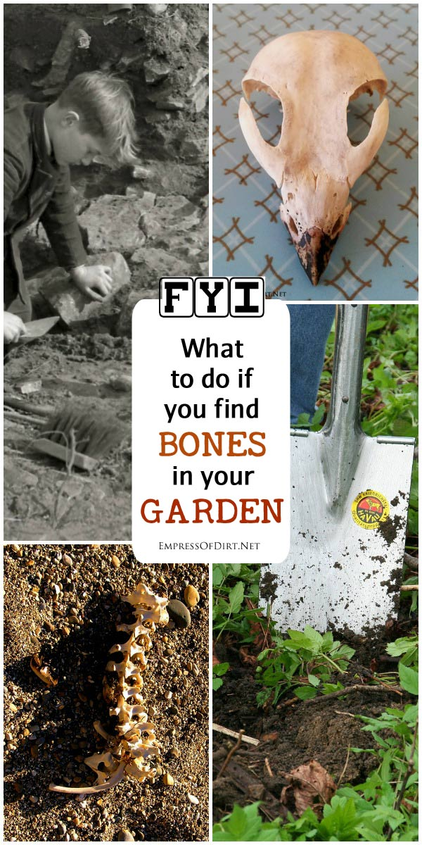 What would happen if you found bones while digging in the garden? Would you know what to do? Today's guest post comes from a biological anthropologist with some basic, helpful advice for making the right decisions should your shovel uncover some unexpected bones.