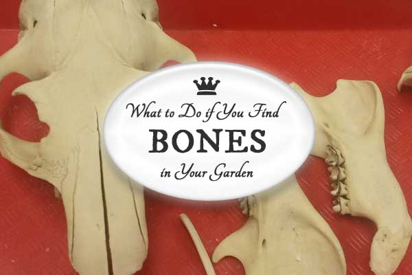 what to do if you bones in your garden empress of dirt what would happen if you found bones while digging in the garden would you know