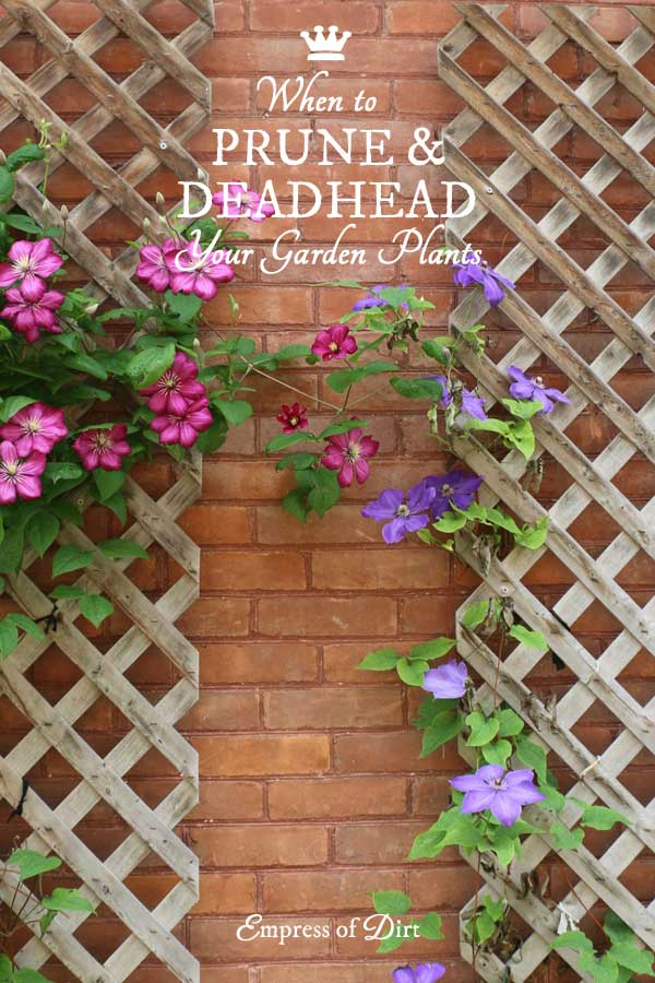 When to Prune and Deadhead Your Garden | Free Printable