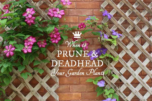 When to Prune or Deadhead your garden plants.