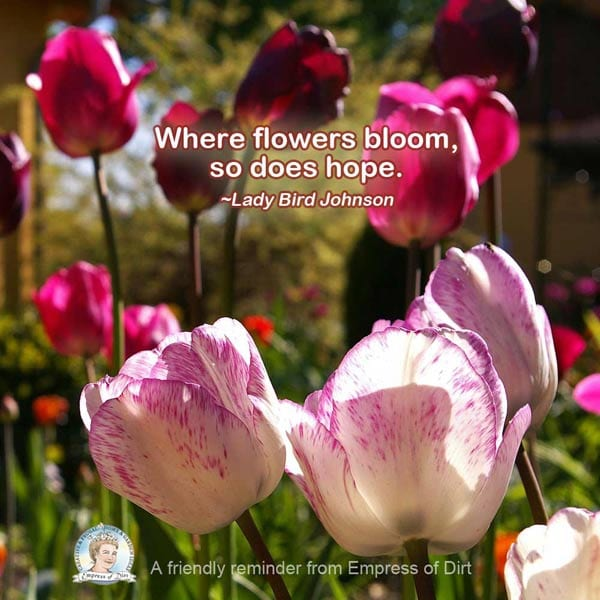 Where flowers bloom, so does hope. ~Lady Bird Johnson