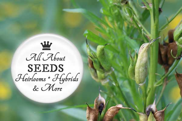 Seeds 101: A simple guide to the basic types of seeds including open-pollinated, heirloom, hybrid, and GMOs.