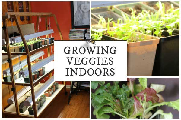 Which Veggies Grow Best Indoors Empress Of Dirt