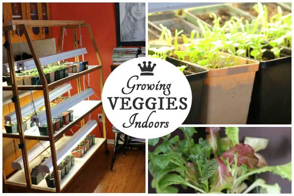 There are a whole bunch of vegetables you can grow indoors any time of year. I've tested a bunch of different seeds and I'll show you which ones worked best for me. If I'd known it would be this easy, I would have started years ago.