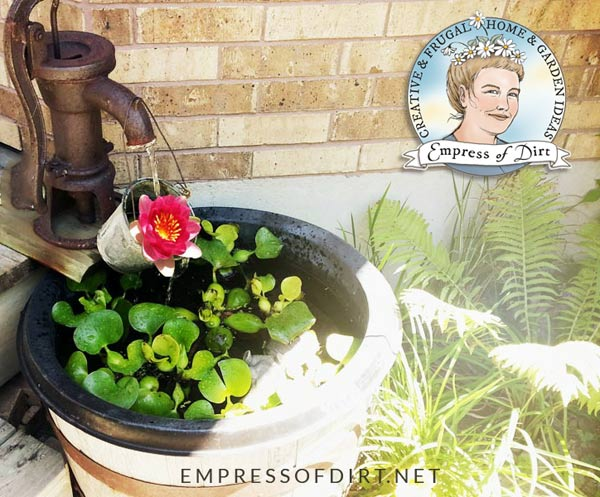 Build a little water garden for your patio or balcony.