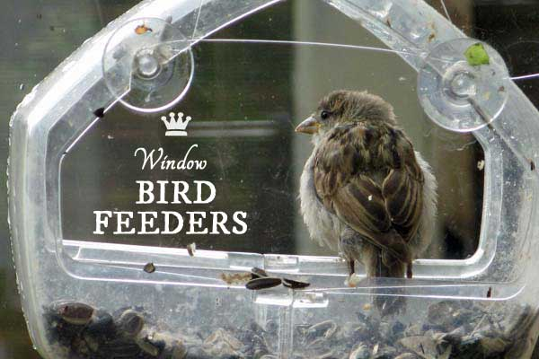 Window bird feeders can be a wonderful way to watch wild birds up close.