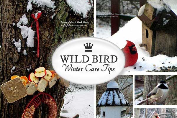 Winter Care For Wild Birds