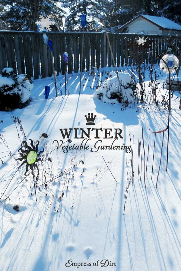 How To Grow Vegetables In The Winter