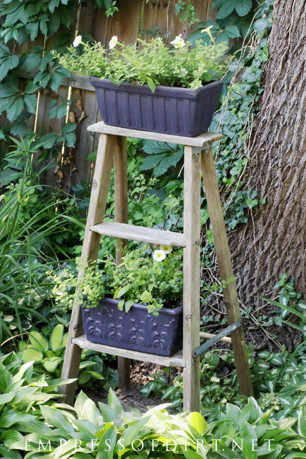 Step ladder with window box planters.