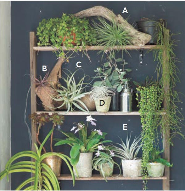 Living With Air Plants