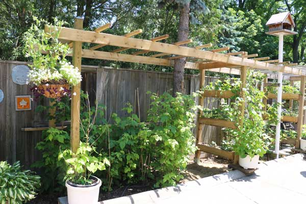 Wood sun arbor at side of driveway with plants.