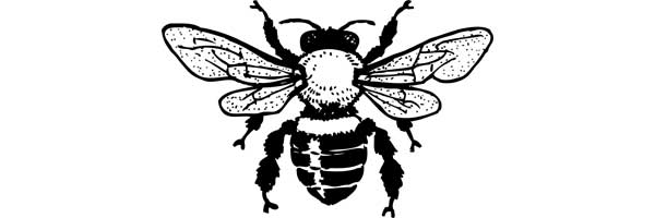 Take the Bee Quiz and test your bee smarts!