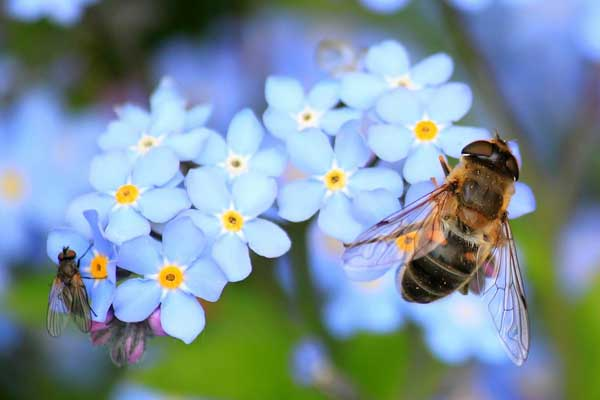 Take this quick quiz and see how much you know about bees—essential pollinators around the world. See what you know about honey bees, queen bees, solitary bees, and more.