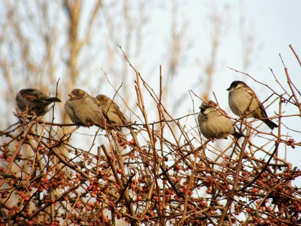 Bushes and trees provide essential habitat for birds.