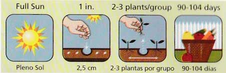 Diagram showing optimum sowing conditions including sun and sowing depth.
