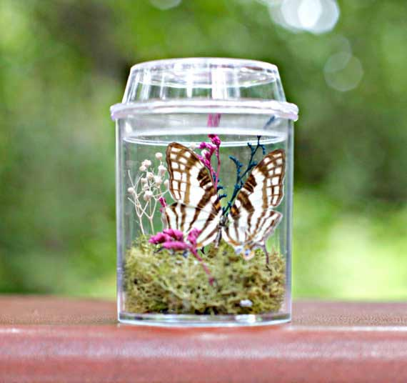 Butterfly terrarium kit | TheAmateurNaturalist Etsy Shop