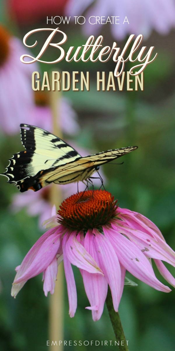 Turn your garden into a butterfly have with these tips. It's not just about plants but providing a safe, secure habitat.