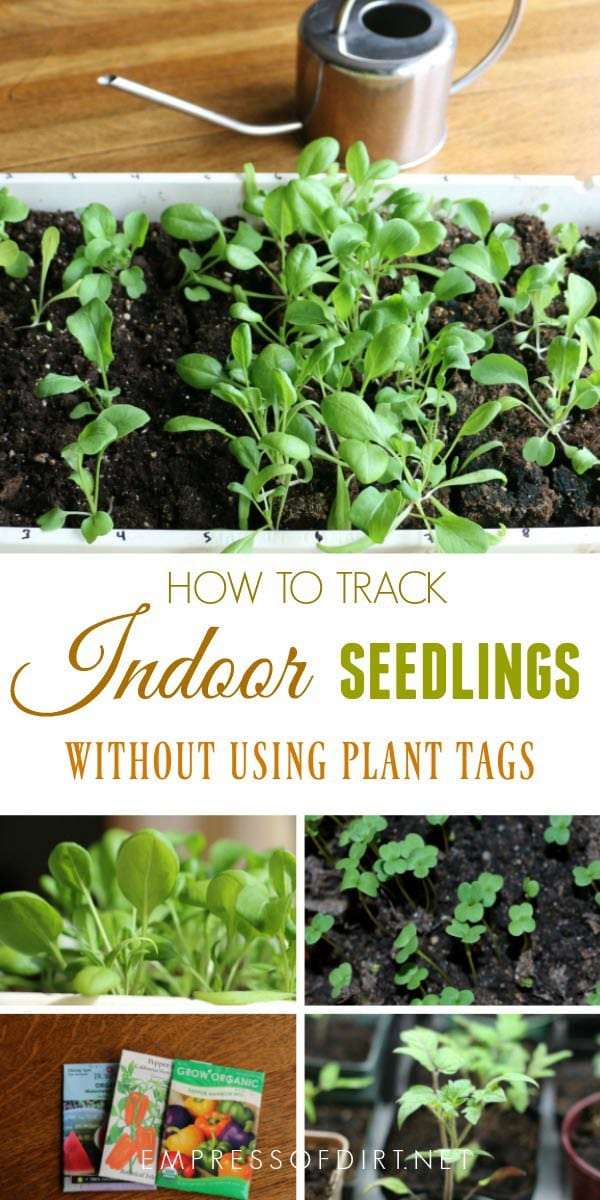 How to track indoor seedlings without using plant tags
