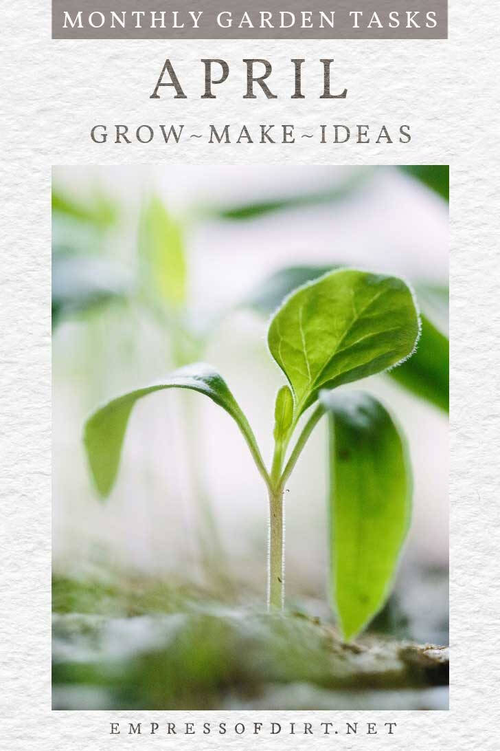 Starting seedlings indoors in April.