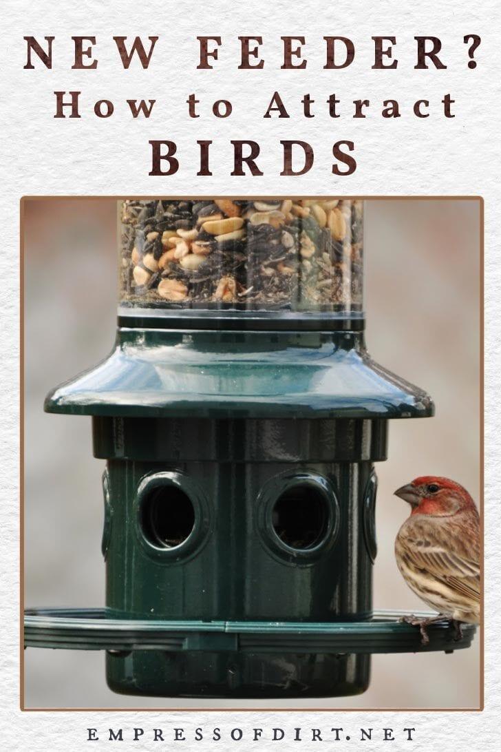 Small bird eating bird seed at feeder.