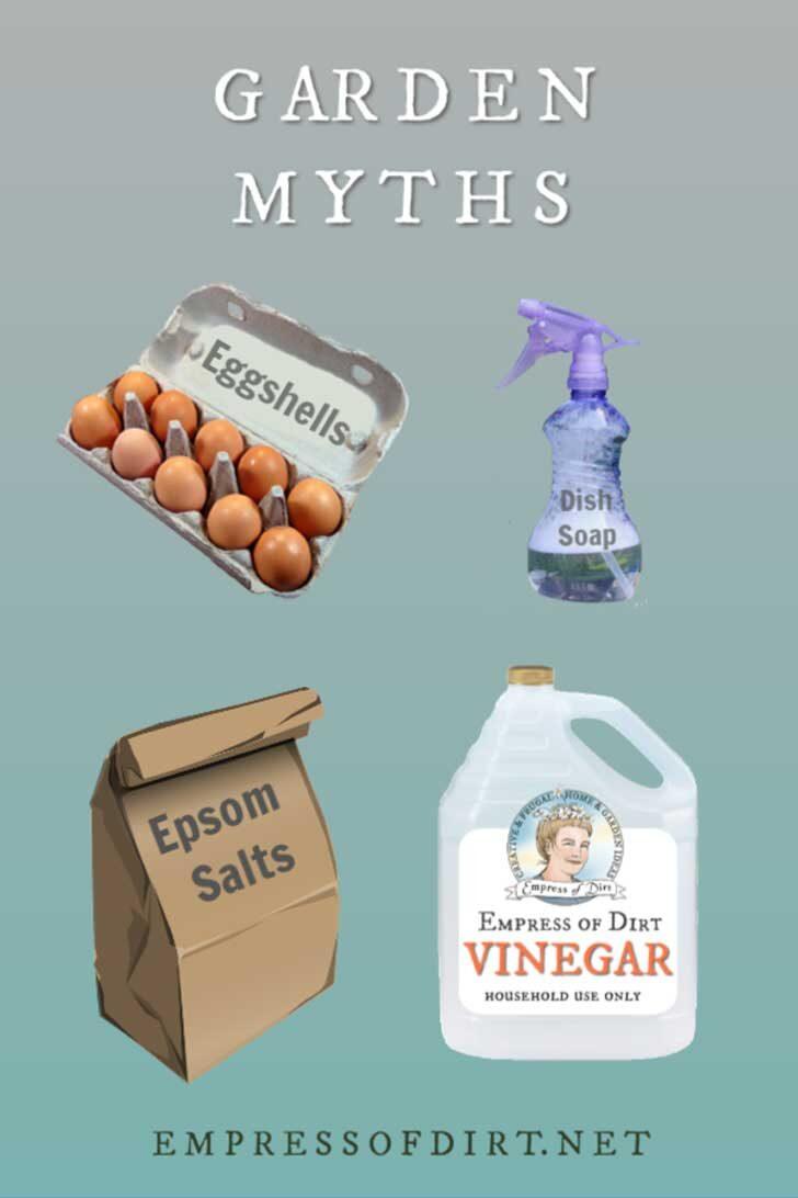 Eggshells, dish soap, Epsom salts, vinegar.
