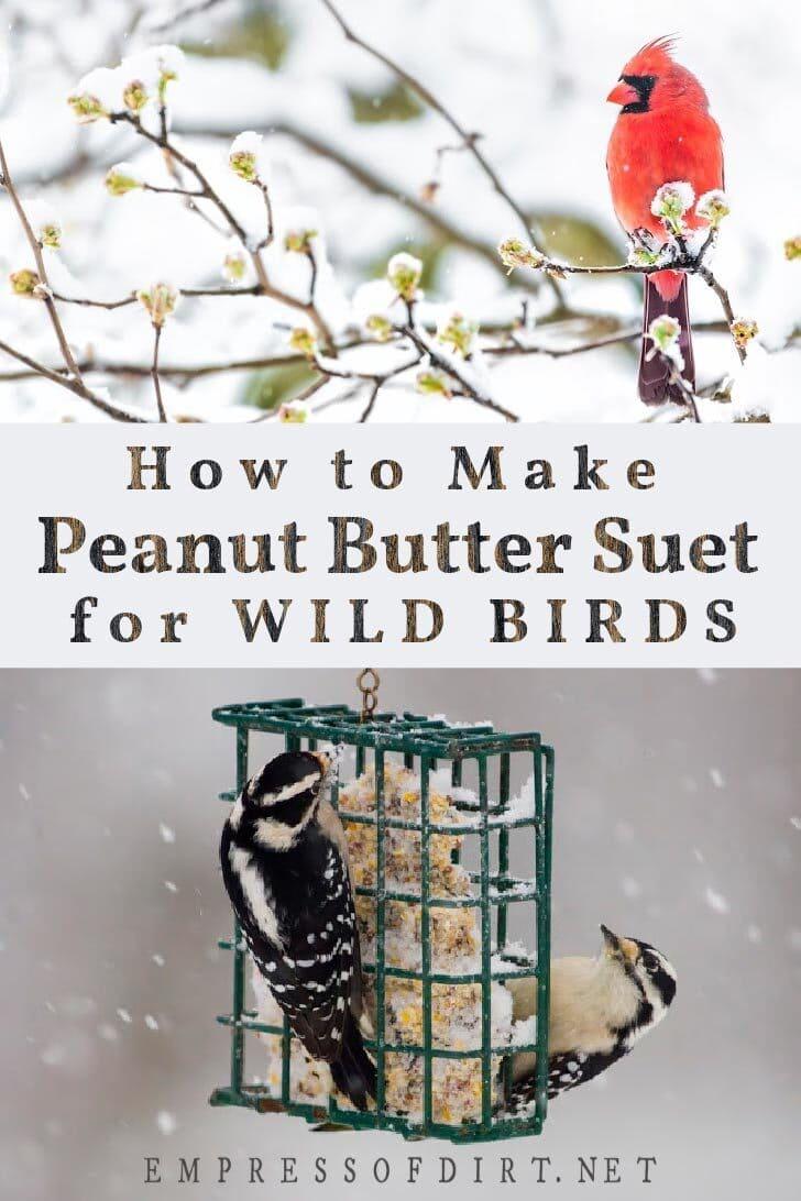Winter birds and homemade suet