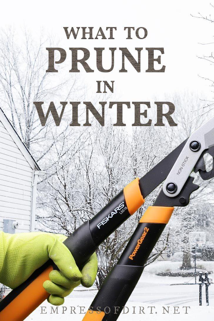 Loppers (pruning tool) in winter garden.