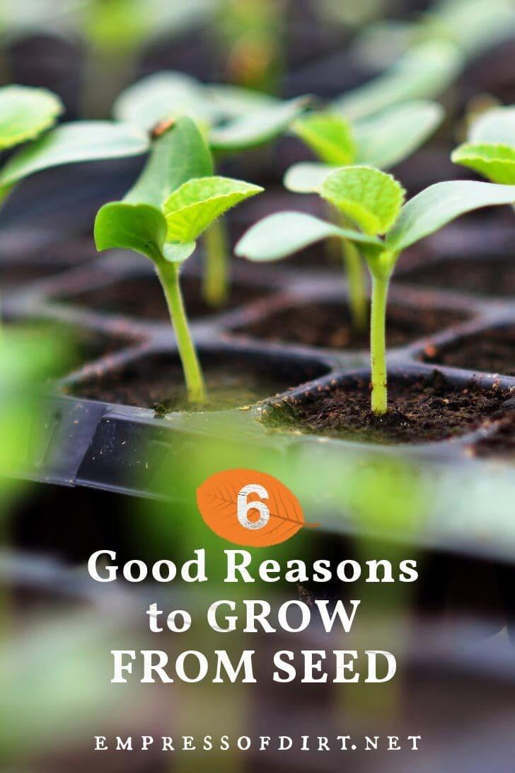Seedlings sprouting indoors