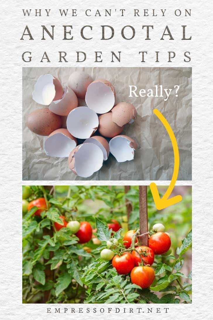 Example of an anecdotal garden tip involving eggshells and tomatoes.