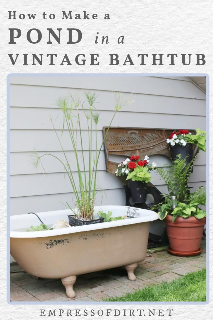 Old-fashioned bathtub made into a little garden pond.