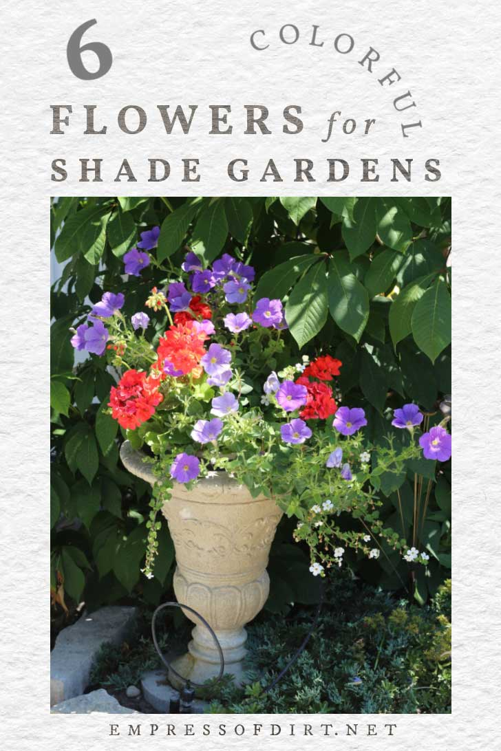 Colorful flowers in a shade garden.