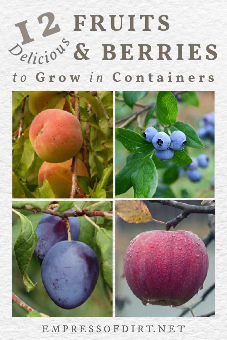 Peach, blueberries, plum, apples.