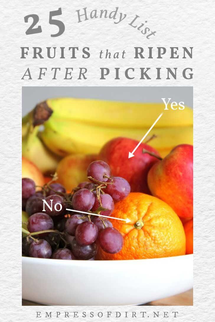 Bowl of fruit including orange, apple, banana, grapes.