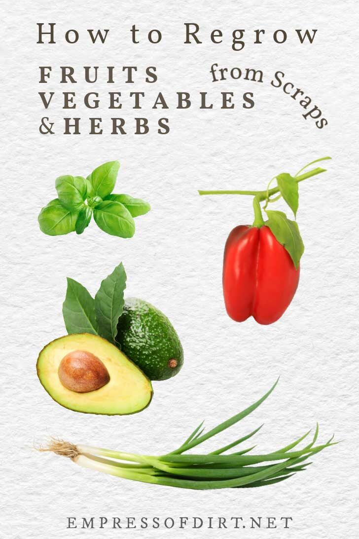 Fruits, vegetables, and herbs you can grow from scraps.