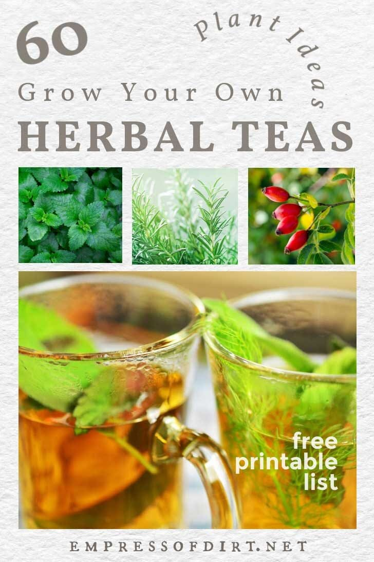 Plants to grow for tea including mint, rosemary, and rosehips; clear mugs of homemade tea with leaves.