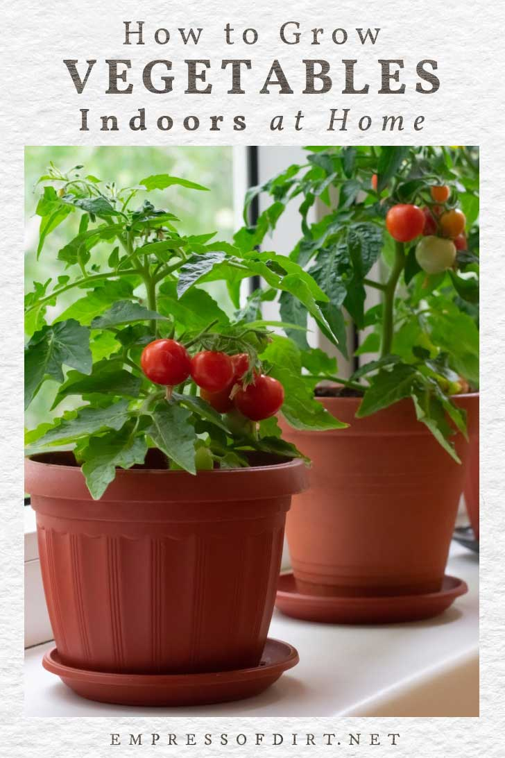 howto grow a vegetable garden indoors