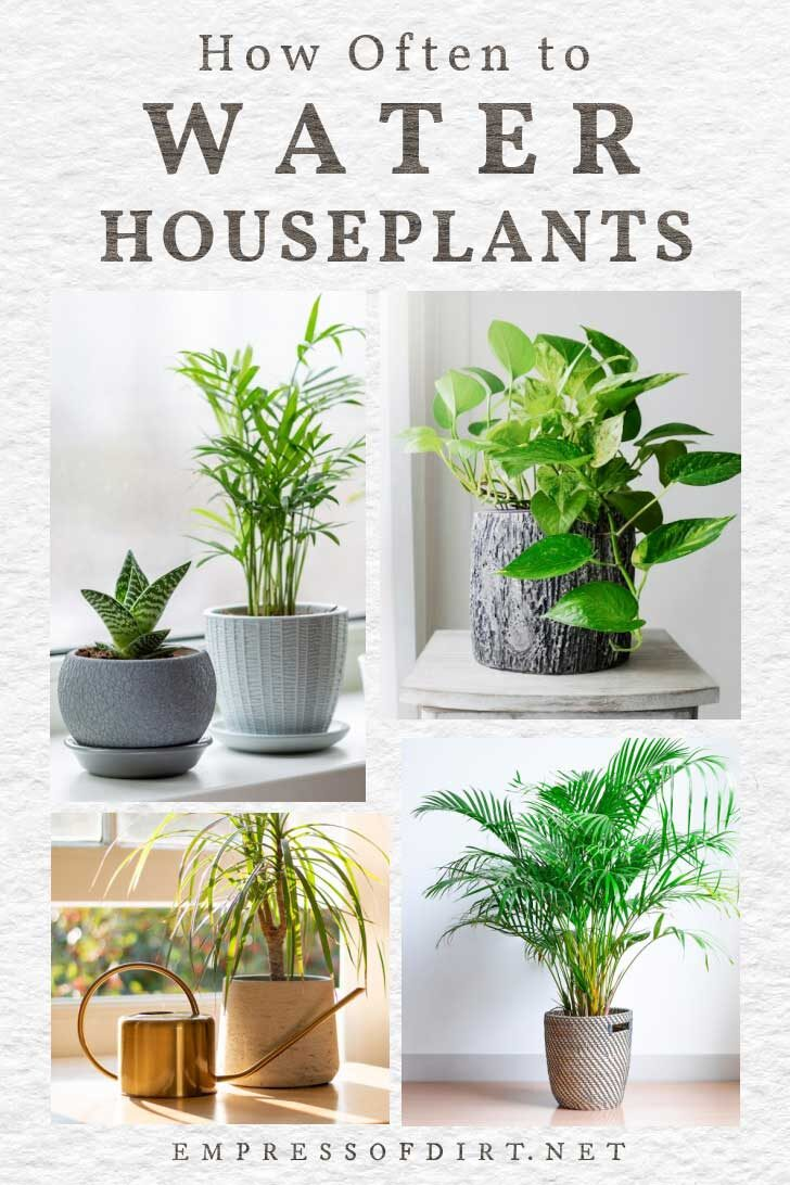 Houseplants in containers in a home.