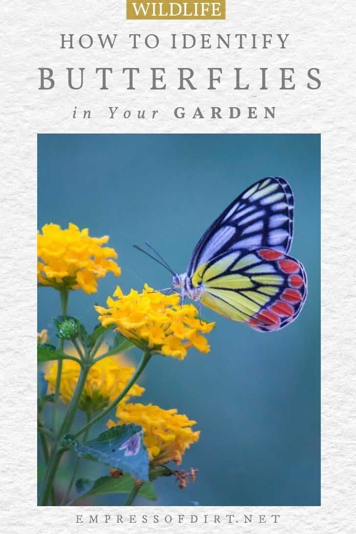 Butterfly landing on garden plant.