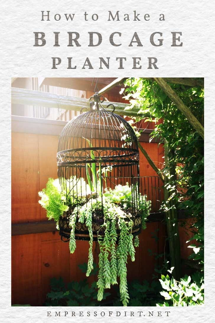 Vintage birdcage planted with trailing succulents.