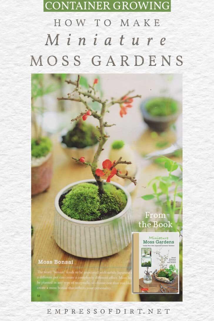 Miniature moss garden with tiny tree.
