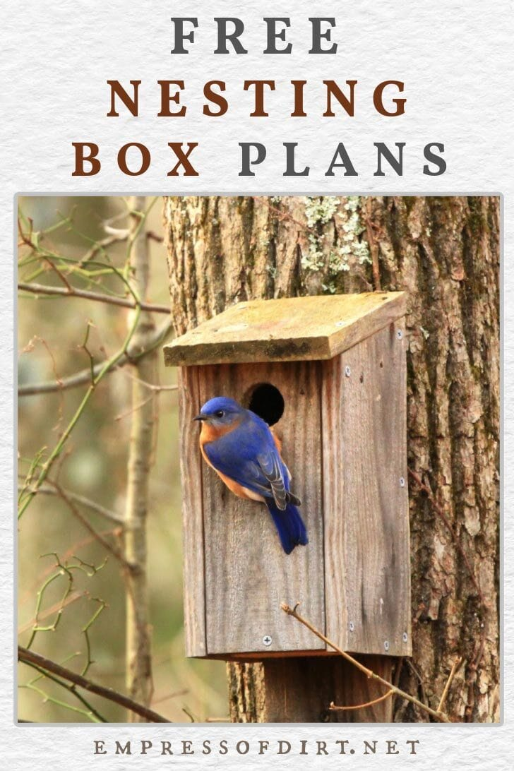 Homemade nesting box mounted on a tree and a bluebird at the entrance.