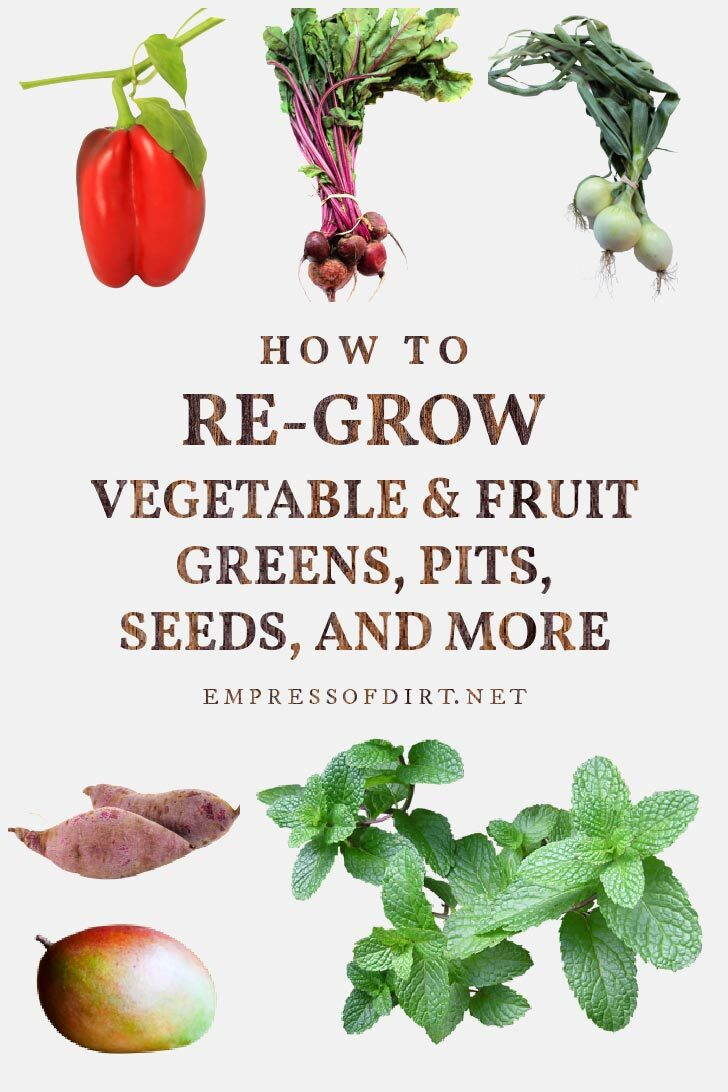 Vegetables that can be propagated including red pepper, beets, and onions.