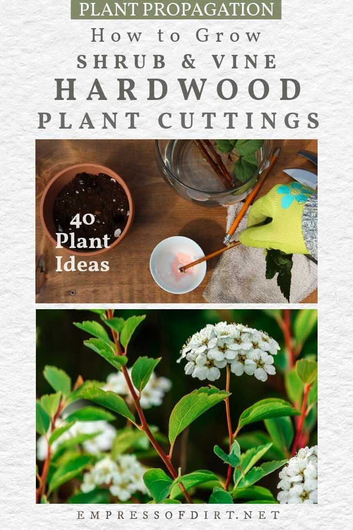 How to Grow Shrubs & Vines from Hardwood Cuttings