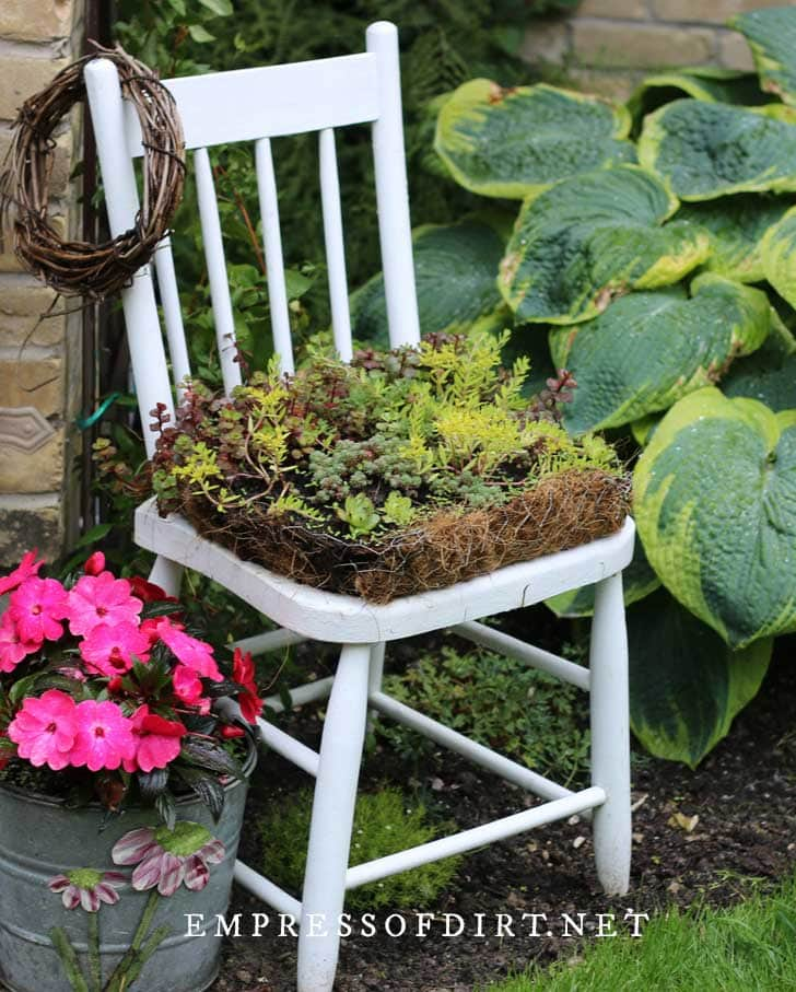 White garden art kitchen chair planted with succulents.