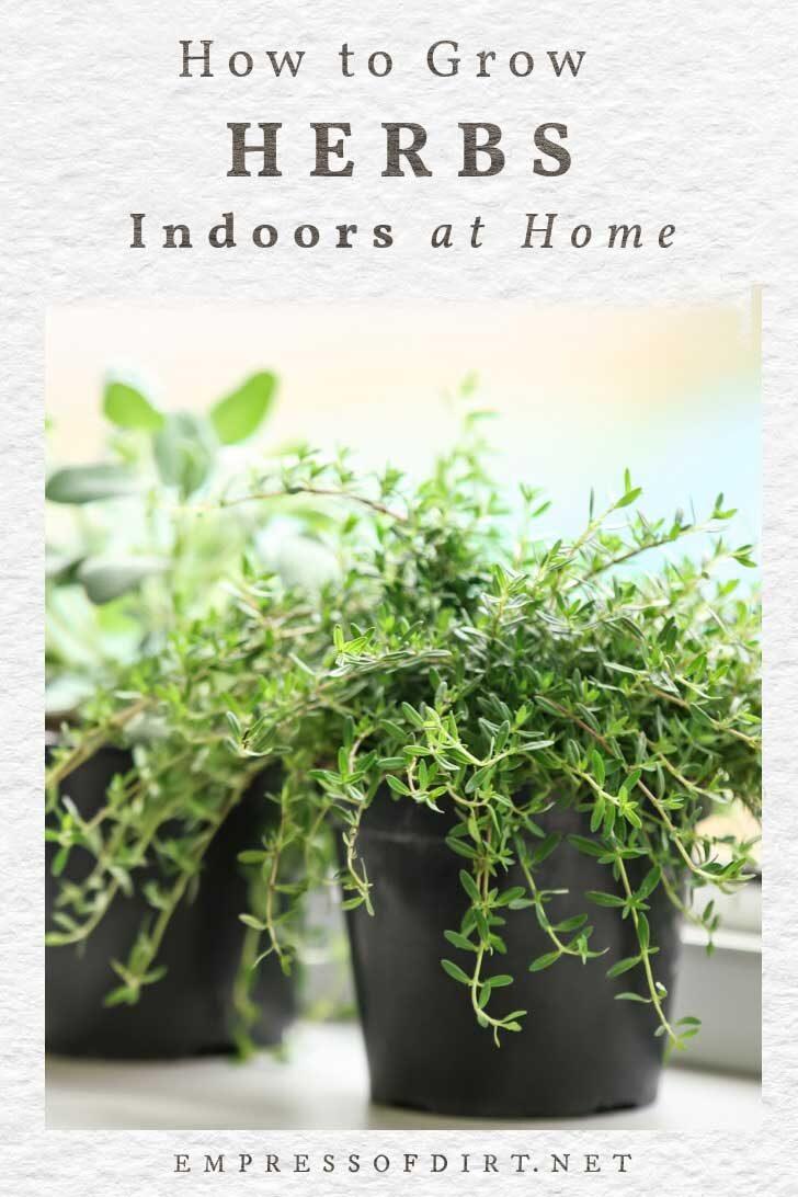 Herbs growing indoors on a windowsill.