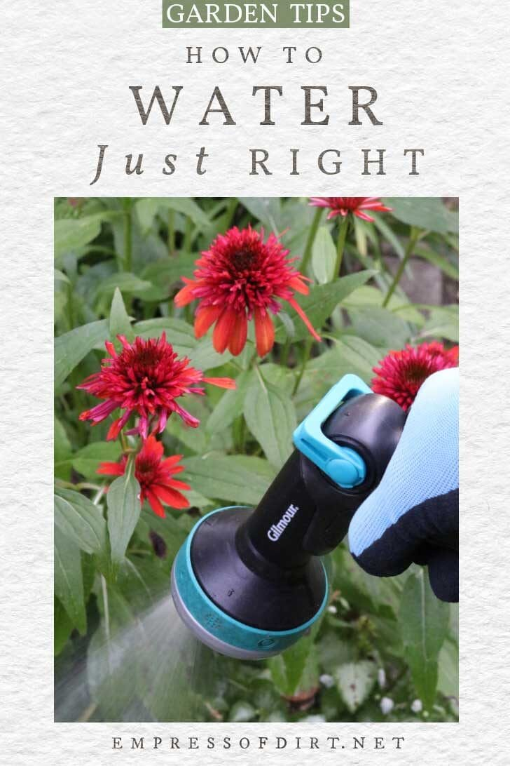 Watering garden flowers with spray nozzle.