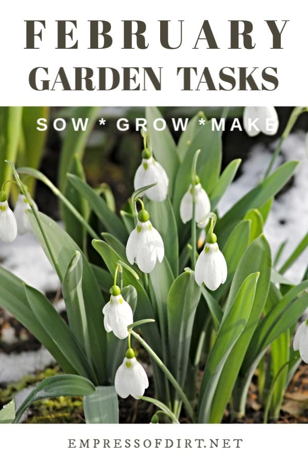 February Garden Ideas | What to Make and Grow