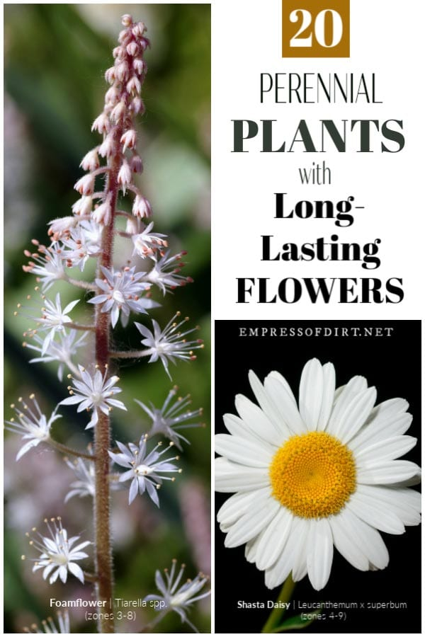 20 Perennials with Long-Lasting Blooms | Tips & Tricks