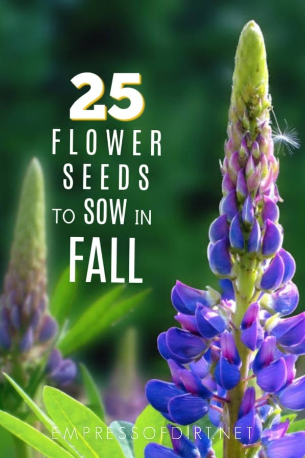 Annual and Perennial Flower Seeds to Sow in Fall | Printable
