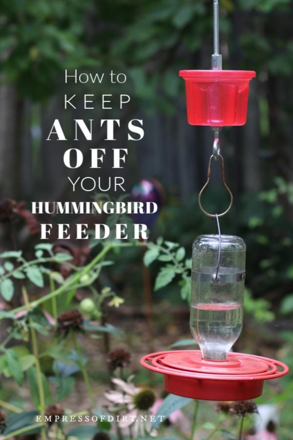 Moat for hummingbird feeder to prevent ants.